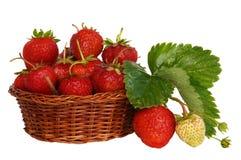 成熟草莓 免版税图库摄影