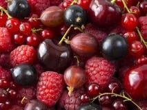 成熟莓、黑醋栗、樱桃、红浆果和鹅莓 混合莓果和果子 顶视图 背景莓果和 免版税库存图片