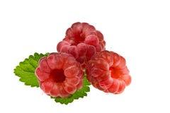 成熟莓。 库存照片