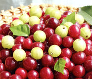 成熟莓果 库存图片