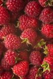 成熟莓特写镜头背景  免版税库存图片