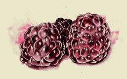 成熟莓的水彩和笔例证 库存例证