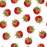 成熟莓背景的传染媒介例证 库存图片