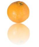 成熟葡萄柚的反映 图库摄影