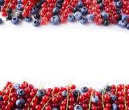 成熟蓝莓、黑醋栗和红浆果 在图象边界的莓果与拷贝空间的文本的 背景莓果 上面竞争 免版税库存照片