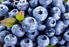 成熟蓝莓-食物背景 免版税库存照片