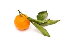 成熟蜜桔 免版税图库摄影