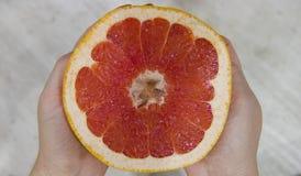成熟被切的葡萄柚 库存图片