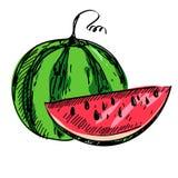 成熟西瓜的传染媒介例证 免版税库存照片
