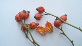 成熟野玫瑰果在冬天 免版税库存照片