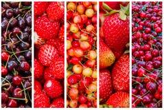 成熟野草莓特写镜头在草的 免版税库存照片