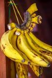 成熟香蕉 库存图片