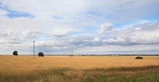 成熟麦子的域。 免版税库存图片