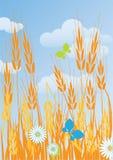 成熟麦子耳朵的领域 免版税库存照片