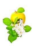 成熟黄色苹果和苹果结构树花 免版税图库摄影