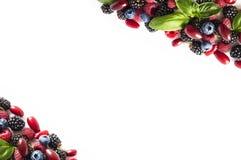 成熟黑莓、蓝莓、莓、cornels和蓬蒿叶子在白色背景 在图象边界的莓果与拷贝sp的 免版税库存图片