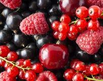 成熟黑醋栗,樱桃,红浆果,莓 混合莓果和果子 顶视图 背景莓果和果子 图库摄影