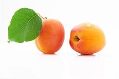 成熟,水多和开胃杏子结果实与绿色叶子 库存图片