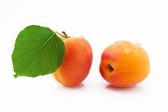成熟,水多和开胃杏子结果实与绿色叶子 免版税库存照片