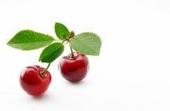 成熟,水多和开胃樱桃莓果 免版税库存图片