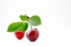 成熟,水多和开胃樱桃莓果 库存照片