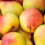 成熟水多的梨关闭  免版税库存照片