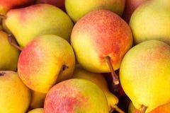 成熟水多的梨关闭  免版税库存图片