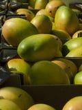 成熟水多的芒果 图库摄影