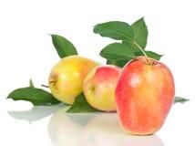 成熟水多的苹果 免版税库存图片