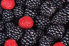 成熟水多的莓果黑莓和莓 免版税库存图片