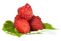 成熟水多的莓 库存图片