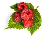 成熟水多的莓 免版税库存照片