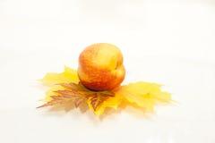 成熟peachon在白色的叶子 免版税图库摄影