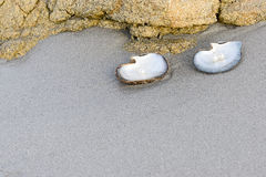成珠状白色 免版税库存照片