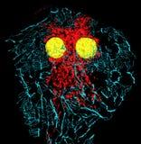 成纤维细胞细胞 库存照片