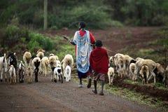 成群山羊的肯尼亚家庭马塞语 图库摄影