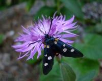 黑成脉络的白色蝴蝶 免版税图库摄影