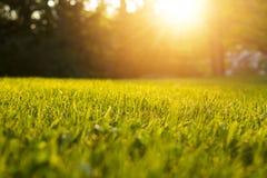 成长和水概念的平静的新鲜的草 免版税库存照片