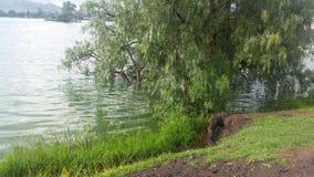 成长的湖由雨国家的墨西哥 免版税库存照片