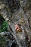 成年男性在垂直的平的墙壁上的攀岩运动员 极端体育上升 免版税图库摄影