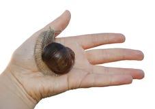 我不害怕蜗牛 免版税图库摄影