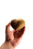我喜欢土豆 免版税库存照片
