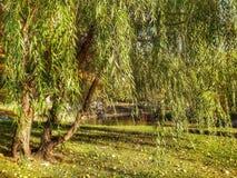 我喜爱的树 免版税库存图片