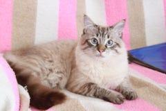我喜爱的猫 库存照片