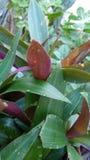 我喜爱的祖母植物 图库摄影