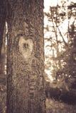 我在森林里发现了我的心脏 库存图片