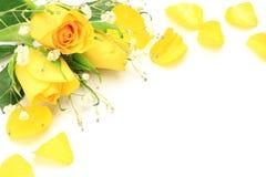 黄色玫瑰和阴霾草 图库摄影