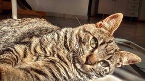 我小的猫1 免版税库存照片