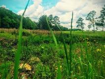 我居住绿草增长的地方 免版税库存图片