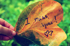 我想念您老叶子的 库存图片